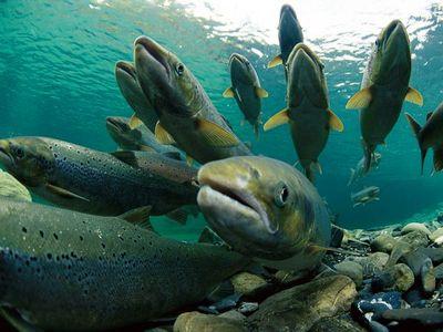 eastcoastbio fish blocking reagents
